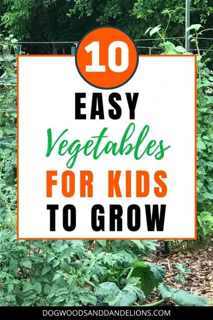 vegetable garden for children